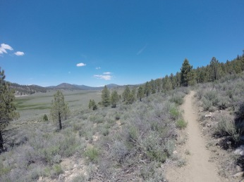 PCT- into Beck Meadow